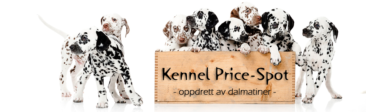 Kennel Price-Spot